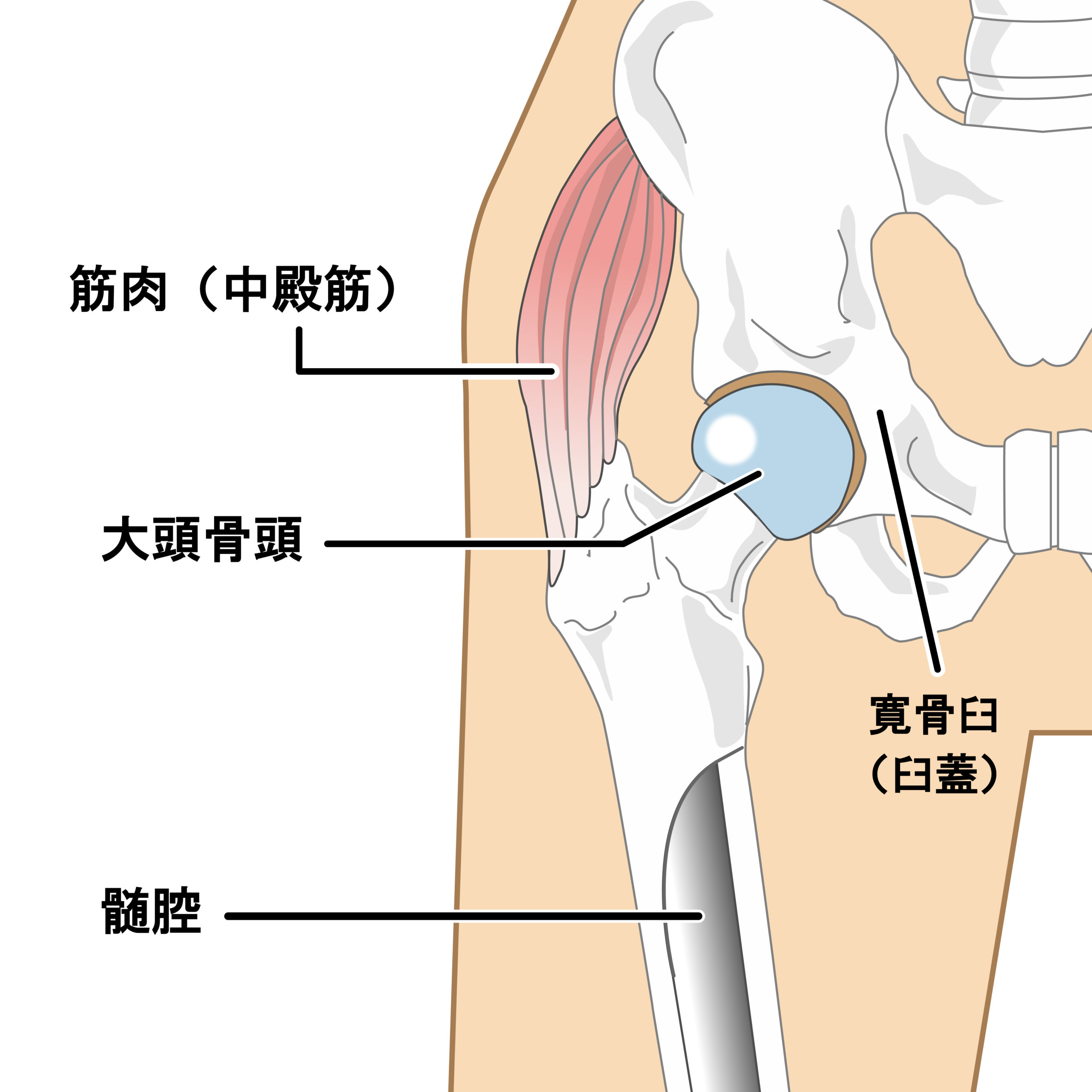 が かく あぐら 股関節 を 痛い と